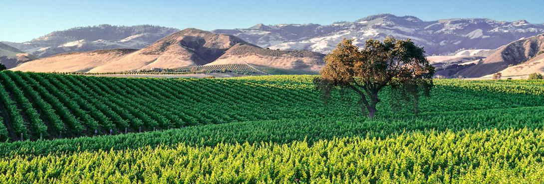 Slider-Santa-Ynez-Valley-Vineyard-winery