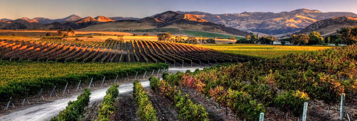 Slider-wine-sy-sunset